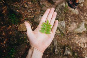 """Warsztaty Ekologiczne: """"Naturalne Prezenty"""""""
